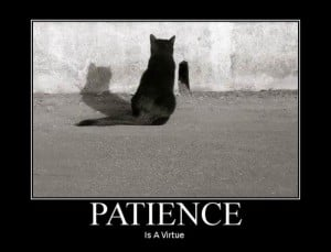 Patience-Is-A-Virtue-300x229.jpg